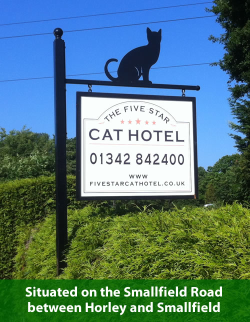 The Five Star Cat Hotel is situated on the Smallfield Road, between Horley and Smallfield.